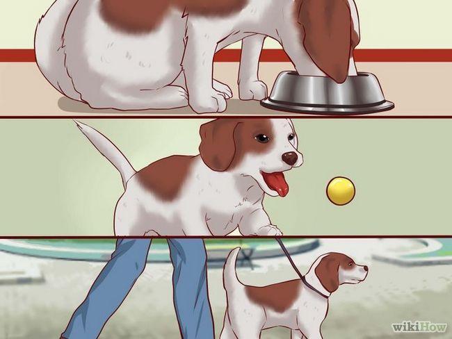 Cómo entrenar a un cachorro