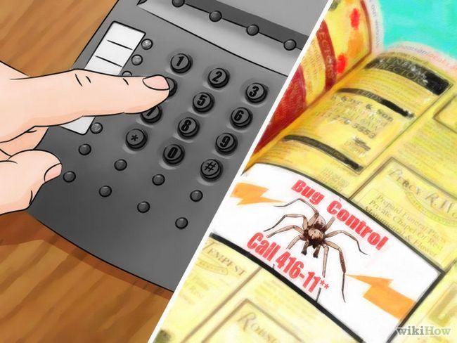Imagen titulada deshacerse de las arañas en la Casa Paso 7