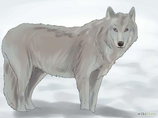 Cómo sobrevivir a un ataque de lobo