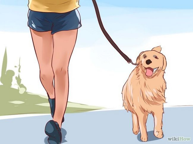 Imagen titulada El amor a su perro Paso 1