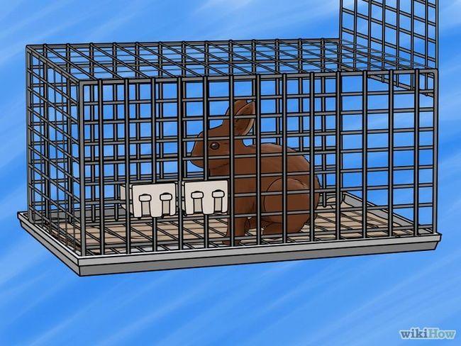 Imagen titulada Transporte Conejo al paso 4