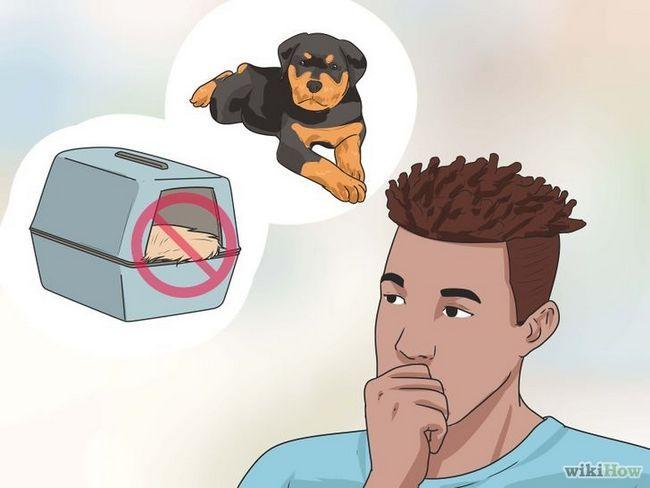 Imagen titulada Llevar un perro en los Estados Unidos Paso 6