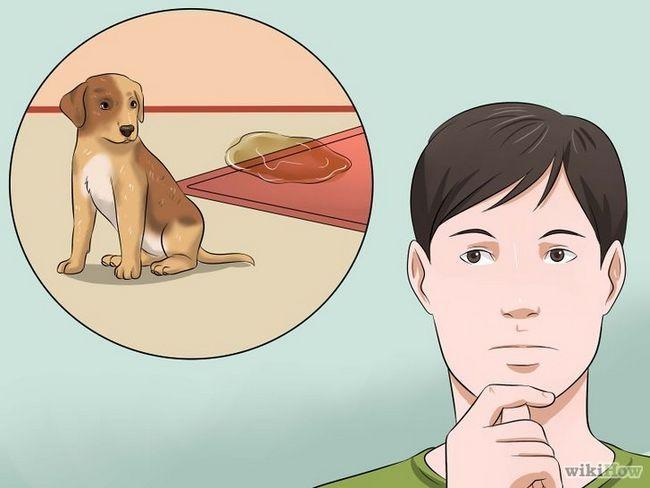 Cómo entrenar a un perro para que se adapte a sus necesidades