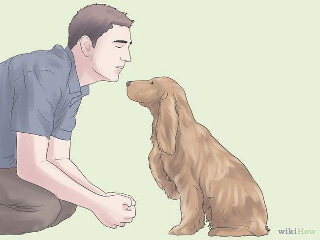 Cómo entrenar a un perro de aguas de cocker