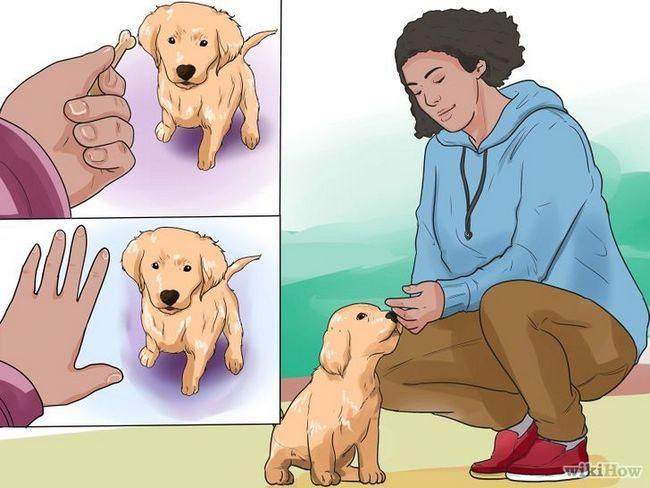 Cómo entrenar a un cachorro de golden retriever