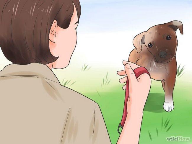 Cómo entrenar a un cachorro a usar el collar