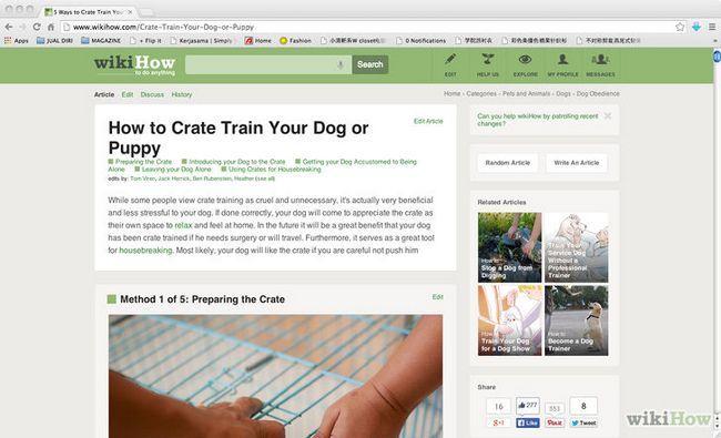 Cómo entrenar a un perro pequeño para hacer sus necesidades en el periódico