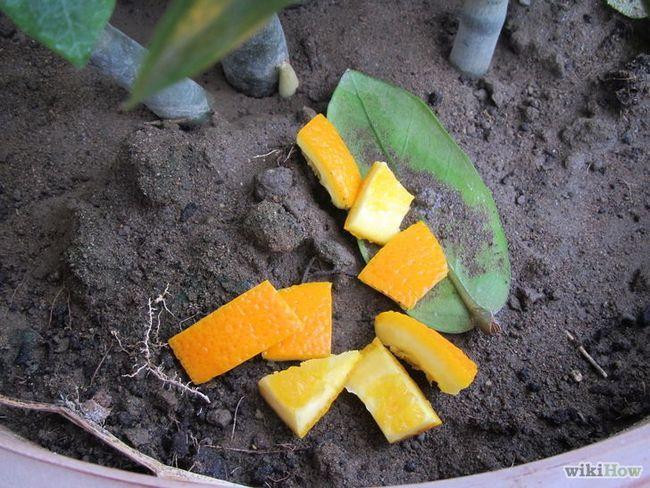 Imagen titulada Use cáscaras de frutas cítricas en el hogar y jardín Paso 9Bullet1