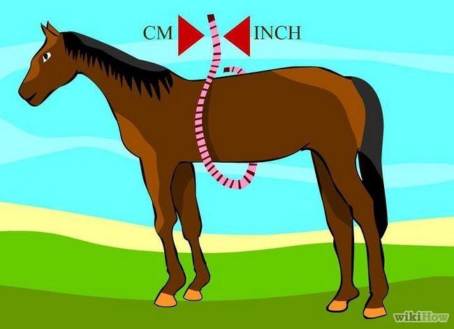 Utilizando una cinta métrica para pesar un caballo