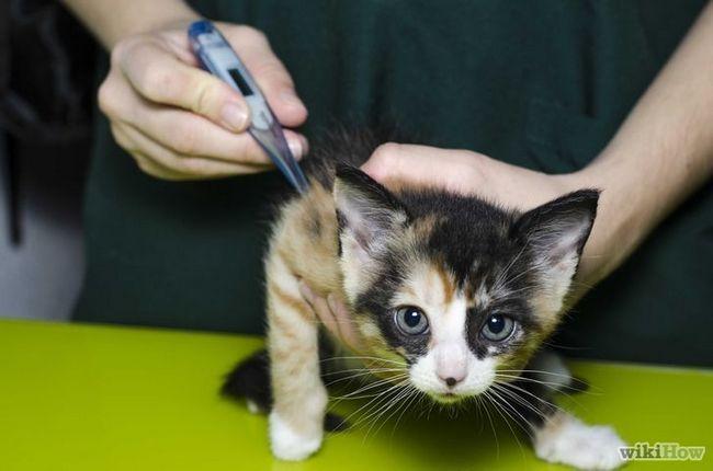 Compruebe la imagen del gato titulado Fiebre Paso es 9Bullet1