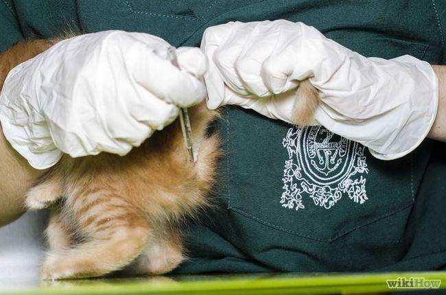 Imagen titulada Compruebe fiebre del gato para la Etapa 6