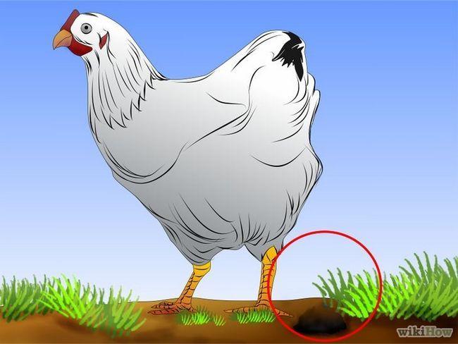 Como vermifugar pollos