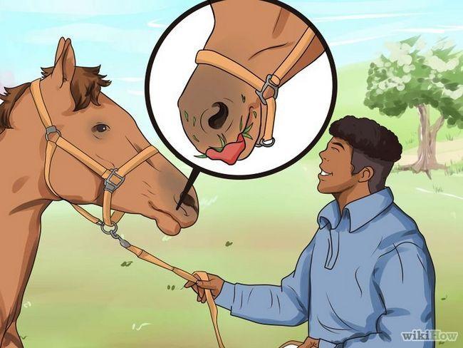 Deworm imagen titulada El caballo Paso 5