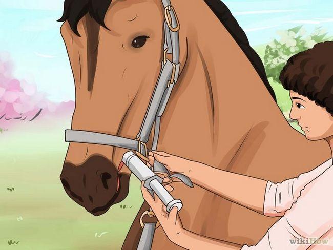 Deworm imagen titulada El caballo Paso 6