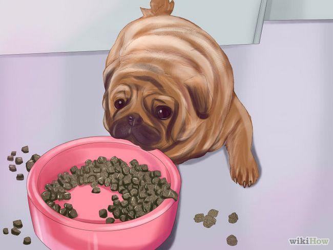 ¿Cómo vivir con un perro pug