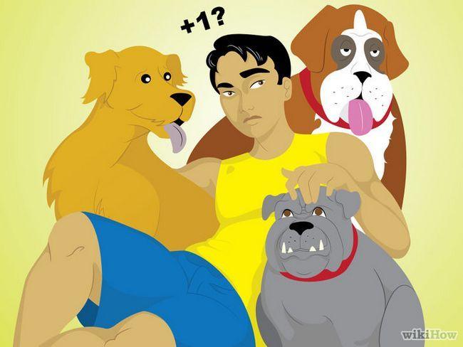 ¿Cómo vivir en una casa con varios perros